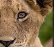 Essentials in Wildlife Photography